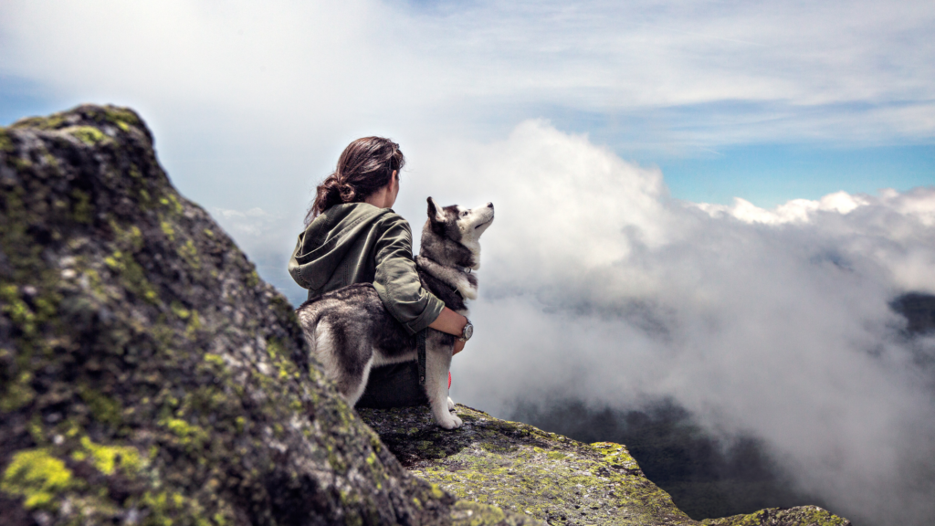 husky traveling and hiking with owner