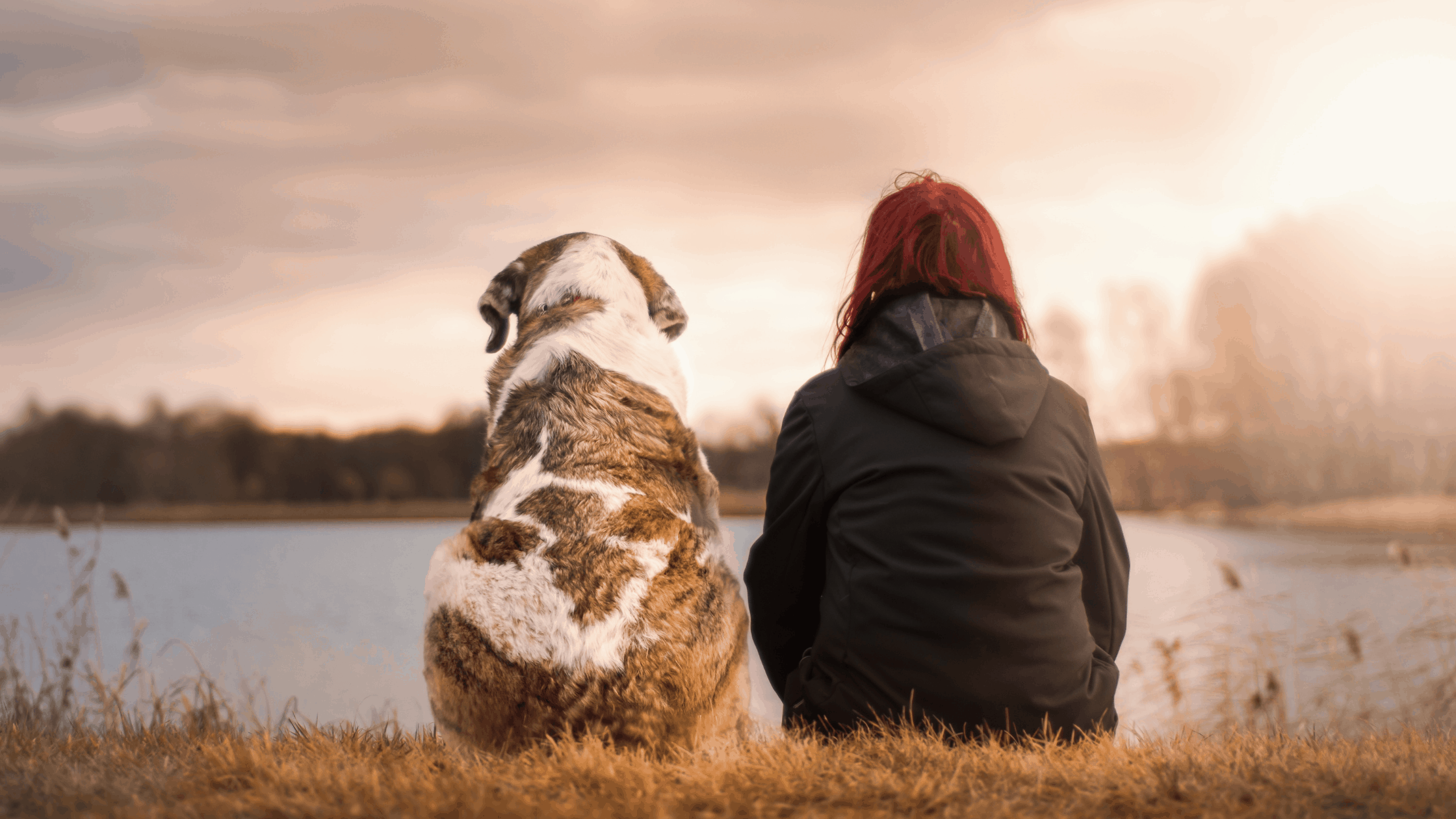 Woman in a black coat sitting right beside her brown and white large dog overlooking a lake at sunset.