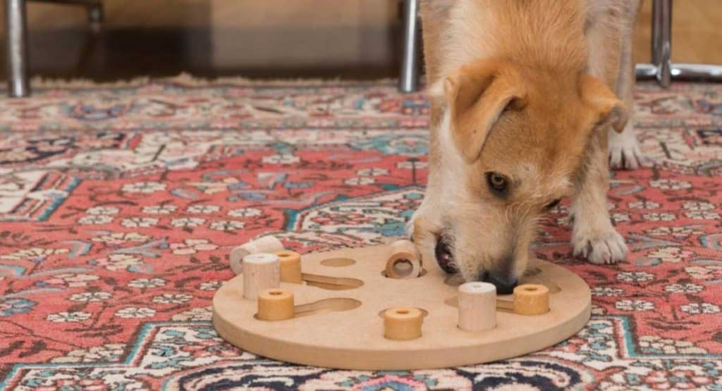 12 Great Mental Exercises For Dogs